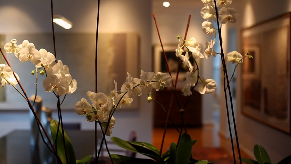 Interior Design – Orchids
